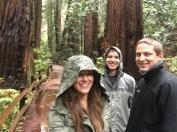 Muir Woods - San Francisco, California